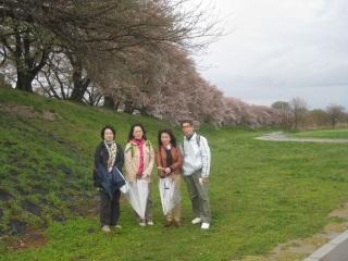 背割り桜4.JPG